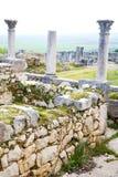 Volubilis w Morocco Africa stary rzymski marniejący zabytek Zdjęcie Stock