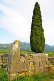 volubilis w Morocco cyprysowym rzymskim marniejącym zabytku Zdjęcie Stock