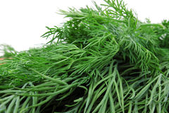 Volume beam sprigs of dill Royalty Free Stock Photos