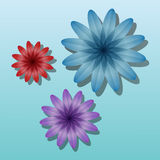 Volume color flowers Stock Photography