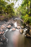 Volume de água através da floresta Foto de Stock Royalty Free