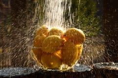 Volume de água para limões Fotografia de Stock Royalty Free