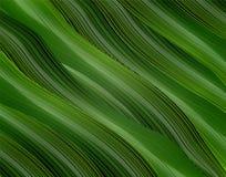 Volumetrisch, Vektor, Hintergrund des Grüns 3d von Blättern im Stil des Realismus vektor abbildung