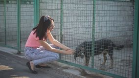 Voluntario de la muchacha en el cuarto de niños para los perros Abrigo para los perros perdidos metrajes