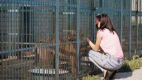 Voluntario de la muchacha en el cuarto de niños para los perros Abrigo para los perros perdidos almacen de metraje de vídeo