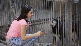 Voluntario de la muchacha en el cuarto de niños para los perros Abrigo para los perros perdidos almacen de video