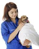 Voluntario del veterinario que conforta al paciente Imagen de archivo libre de regalías