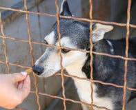 Volunteer feeding dog at animal shelter. Adoption. Concept Stock Photography