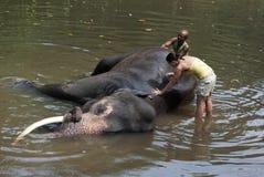 Volunteer & Mahout Washing Elephant. Kegalle, Sri Lanka- March 06, 2012: A volunteer is washing an elephant with elephant's mahout at Millennium Elephant Stock Photos
