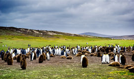 Volunteer Point Stock Image