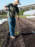 Volunteer  preparing soil at community farm Stock Photos