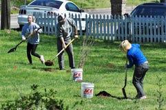 Volunteer Tree Planting Riparian Restoration Project. Volunteers planting tree seedlings to help restore water quality of Sorghum Creek, an urban stream in Stock Photo