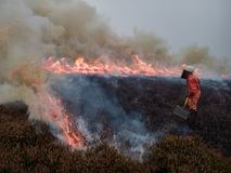 Volunteer Woman Firefighter. A volunteer female firefighter in protective clothing helping to control a heathland fire, set deliberately as part of a habitat stock photos