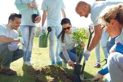 Group of volunteers planting tree in park Royalty Free Stock Image