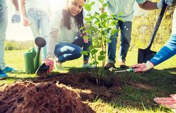 Group of volunteers hands planting tree in park. Volunteering, charity, people and ecology concept - group of volunteers hands planting tree seedling in park royalty free stock photo