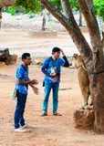 Volunteers with Bengal tiger at the Tiger Temple Royalty Free Stock Photo