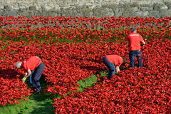 Volunteers installing the 888,246 ceramic poppies Stock Photos