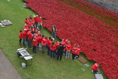 Volunteers installing poppies Tower of London. Volunteers installing poppies at Tower of London as part of WW1 centenary commemorations Royalty Free Stock Photo