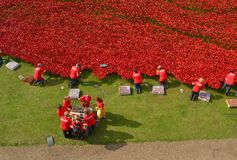 Volunteers installing poppies Tower of London Royalty Free Stock Photography
