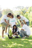 Volunteers planting Stock Image