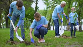 Volunteers planting tree saplings in park, natural resources conservation, care stock video