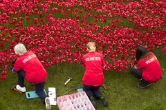 Volunteers working with poppies near Tower of London Stock Photography