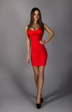 Voluptuous adult brunette in sexy red dress on grey background Stock Images