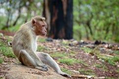 Volwassen aap in diepe gedachten stock foto's