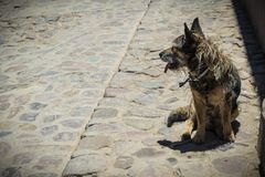 Volwassen die hond op de straat wordt verlaten stock foto