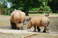 Volwassen en kleine rinocerossen in de dierentuin Royalty-vrije Stock Foto's