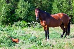 Volwassen moederpaard met haar veulen stock foto