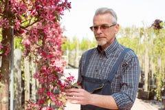 Volwassen tuinman dichtbij de bloemen De handen die de tablet houden In de glazen, een baard, die overall dragen In de tuinwinkel stock fotografie