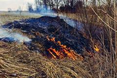 Vom Brennen des trockenen Grases, werden Insekten, Igele und Kaninchen getötet lizenzfreies stockbild