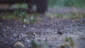 Vom Dach zum Grundbratenfettregenwasser stock video