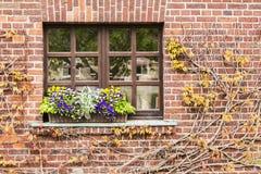 Vom Efeu angrenzend Fenster Stockfotos