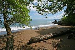 Vom Wald zum Strand Stockfotos