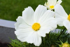 Von Blumen im Sommer zuerst bl?hen stockfotografie