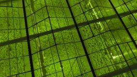 Von der Luft - Au?enaufnahme des Gew?chshauses mit LED-Lichtern an f?r wachsende Anlagen stock footage