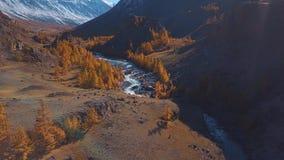 Von der Luft - Flug über einem Gebirgsherbstfluß Das Wasser ist Türkis und die Lärche ist gelb Flug in einem schönen stock footage