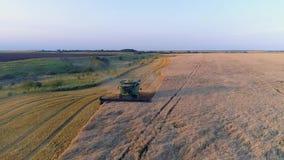 Von der Luftdraufsicht: Erntemaschinenende, das Weizen auf Weizenfeld bei Sonnenuntergang erntet Fliegen direkt über Mähdrescher  stock video footage