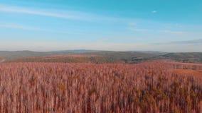 Von der Luftdraufsicht der Landstraße durch Felder und Wälder im Sommer clip Draufsicht der Waldfläche mit Straße stock video footage