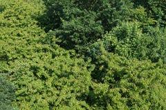 Von der Luftdraufsichtgrünbaumwaldunterschiedliche Spezieskulturvarietäts-Hintergrundbeschaffenheit der Treetops stützbar lizenzfreie stockfotos