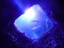 Von der Unterseite des Meeres Stockfotos
