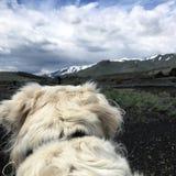 Von einer Hundeperspektive Stockbilder
