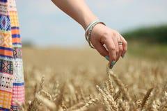 Von Feld zu Mehl Stockbilder