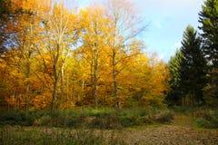 Von Grünem zum gelben Wald Stockfotografie