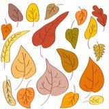 Von Hand gezeichnet Herbstblätter Lizenzfreie Stockfotos