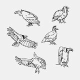 Von Hand gezeichnete Bleistiftgraphiken Greifvögel eingestellt stockfotografie