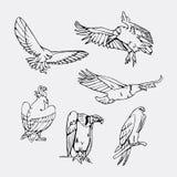 Von Hand gezeichnete Bleistiftgraphiken Greifvögel eingestellt Stockbild