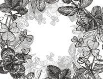 Von Hand gezeichnete grafische Kleeblumenillustration Gemaltes botanisches drei-leaved Wiesengras, lokalisiert auf weißem Hinterg Stockfoto